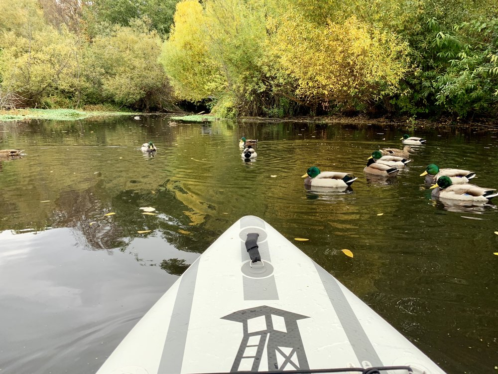 Paddling with the ducks in Duck Bay