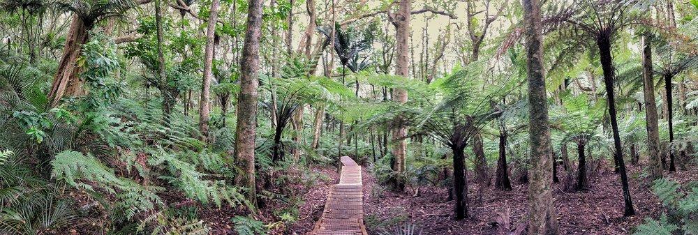 20171022_New_Zealand_Clevedon_scenic_reserve_climb_pano.jpeg