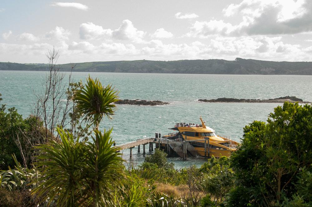 Ferry from the mainland to Tiritiri Matangi Island