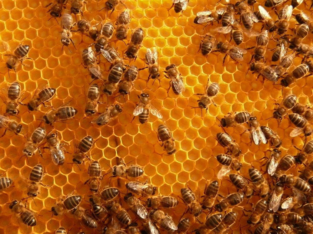 No honey or bee products can be brought into New Zealand