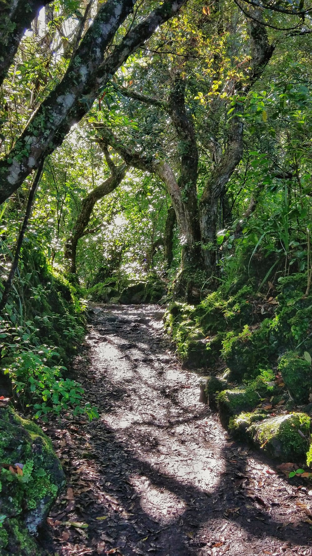 Less volcano and more enchanted forest closer to Rangitoto summit