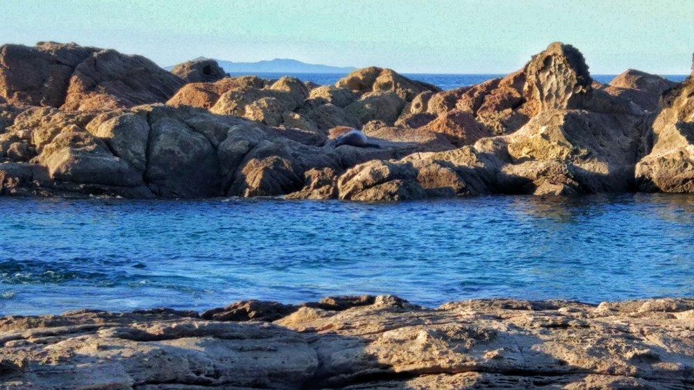 Oscar the seal sleeping on the rocks. Can you spot him?