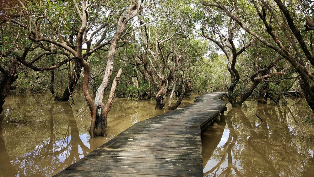 boardwalk through the enchanting mangroves to the Haruru Falls