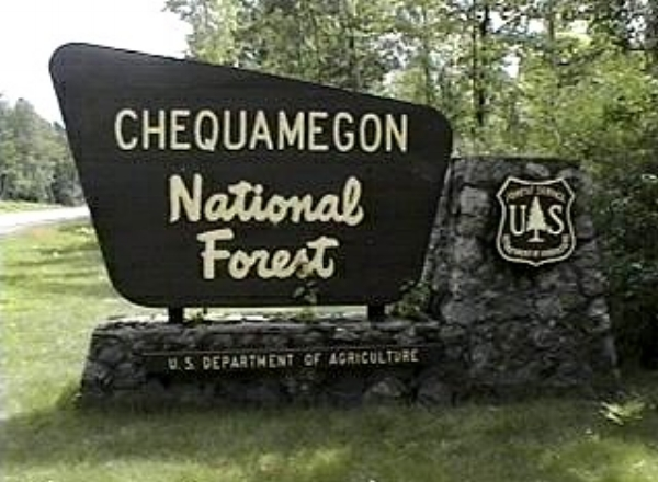 cheq-forest.jpg