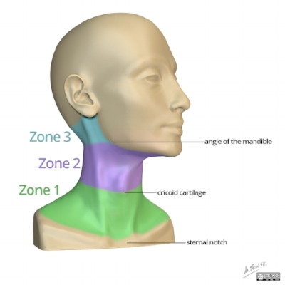 zones neck.jpg