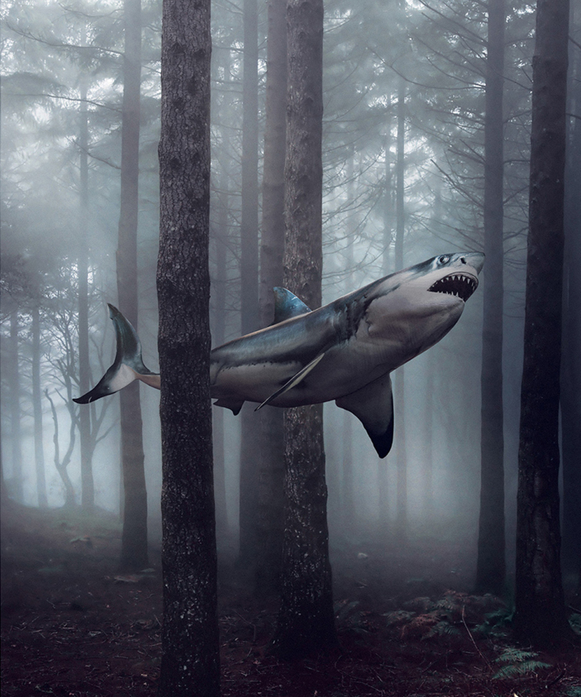 shark_web.jpg