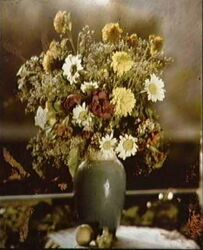 Lippmann's flowers photograph created in the 1890s