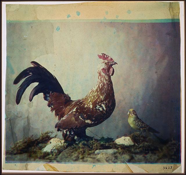 Untitled,Louis Arthur Ducos du Hauron