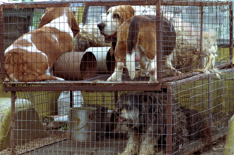 Puppy Mills 1 Love 4 Animals