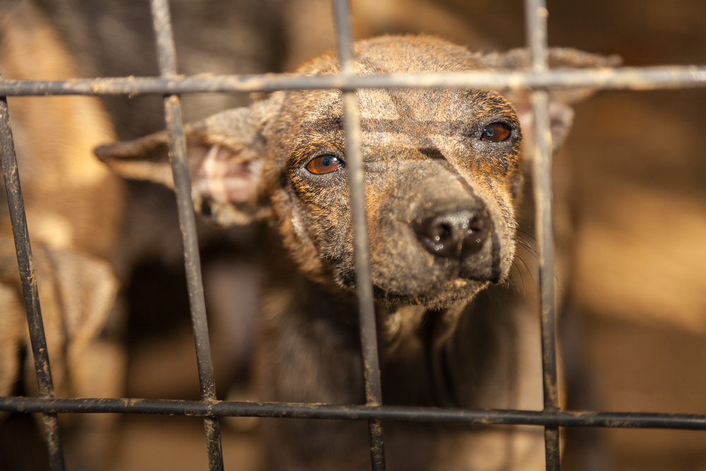1Love4A-AnimalCruelty-2.jpg