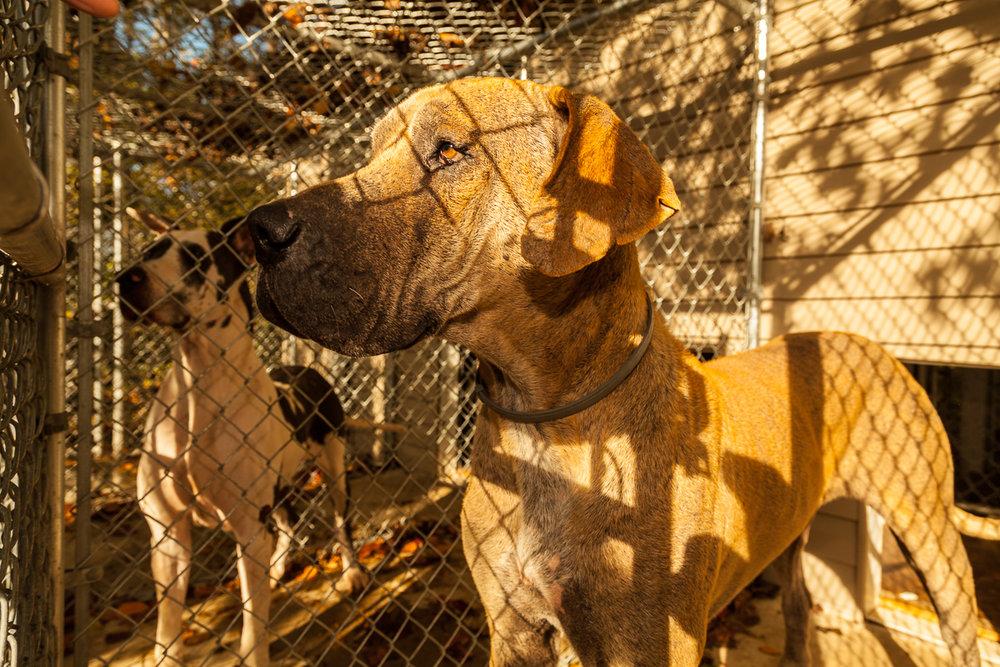 1Love4A-AnimalCruelty-3.jpg