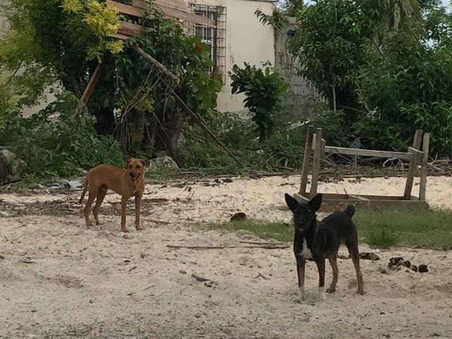 Hurricane-Irma-Slideshow-2.jpg