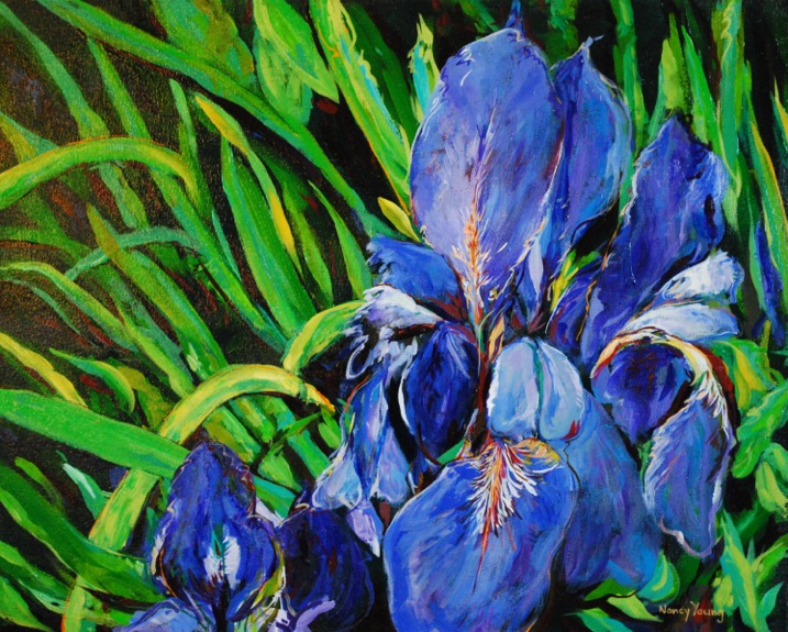 Nancy Young | Painting of a Blue Flag Iris