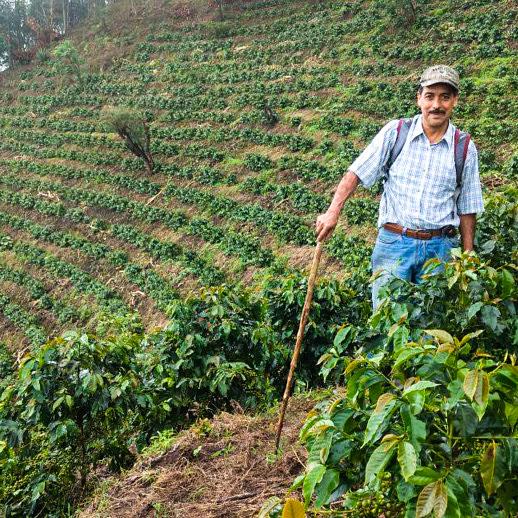 Señor Juares - Manden, der sammen med resten af familien Juares ejer og driver kaffefarmen.Billedet her er fra El Guatelon-farmens højest belligende mark, kaldet La Loma (The Hill).