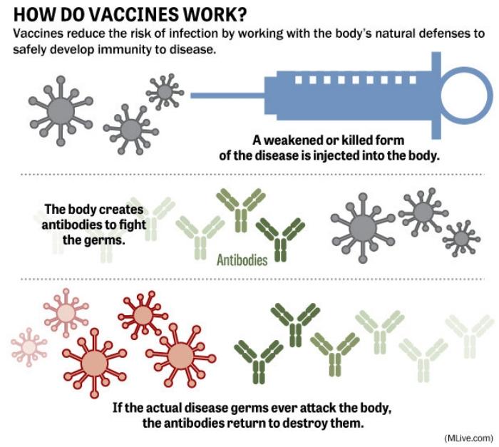 how-vaccines-workjpg-1e47f187de608df2.jpg