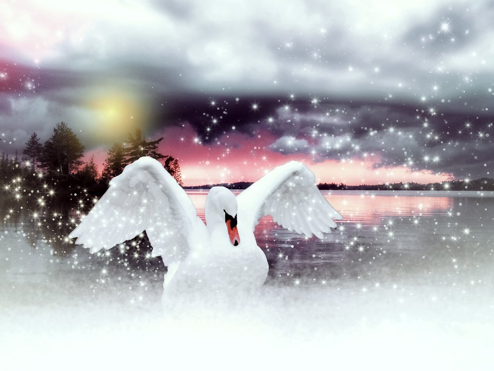 water-snow-winter-bird-wing-white-752118-pxhere.com.jpg