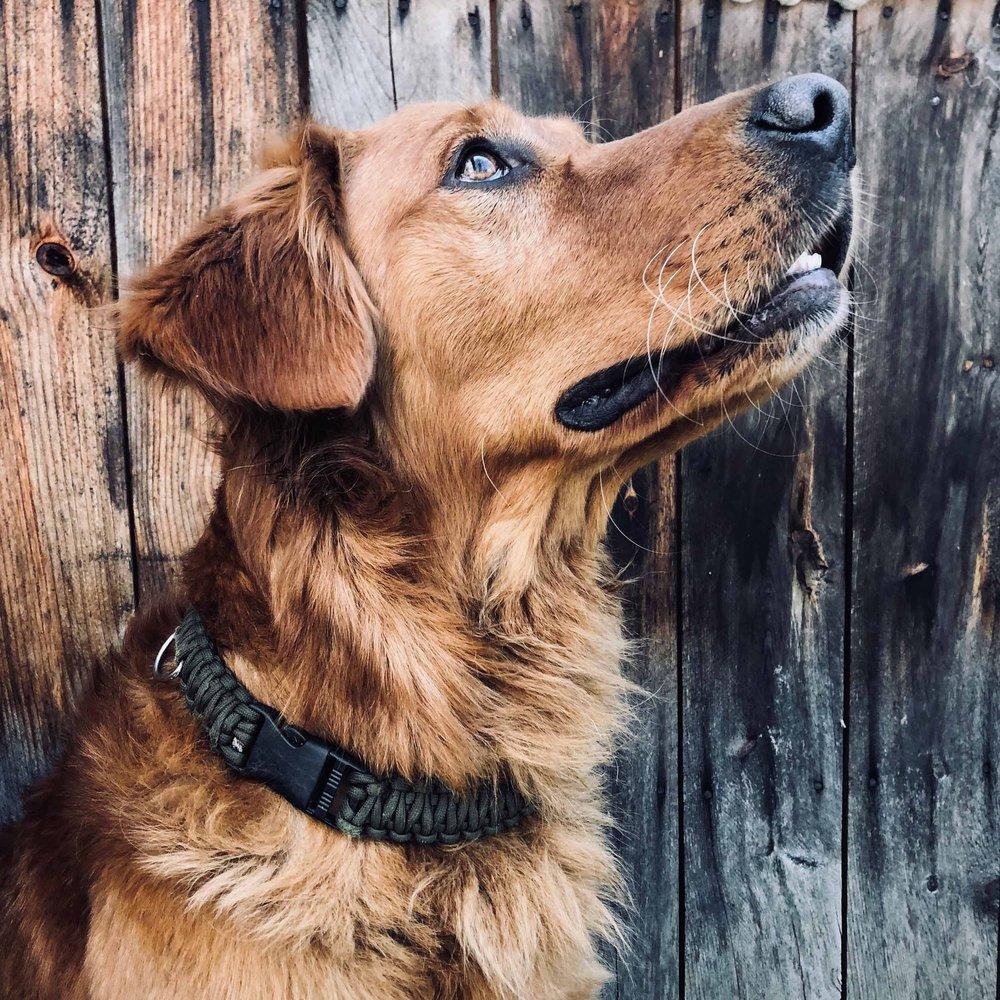 ReFIND_Paracord Dog Collar.jpg
