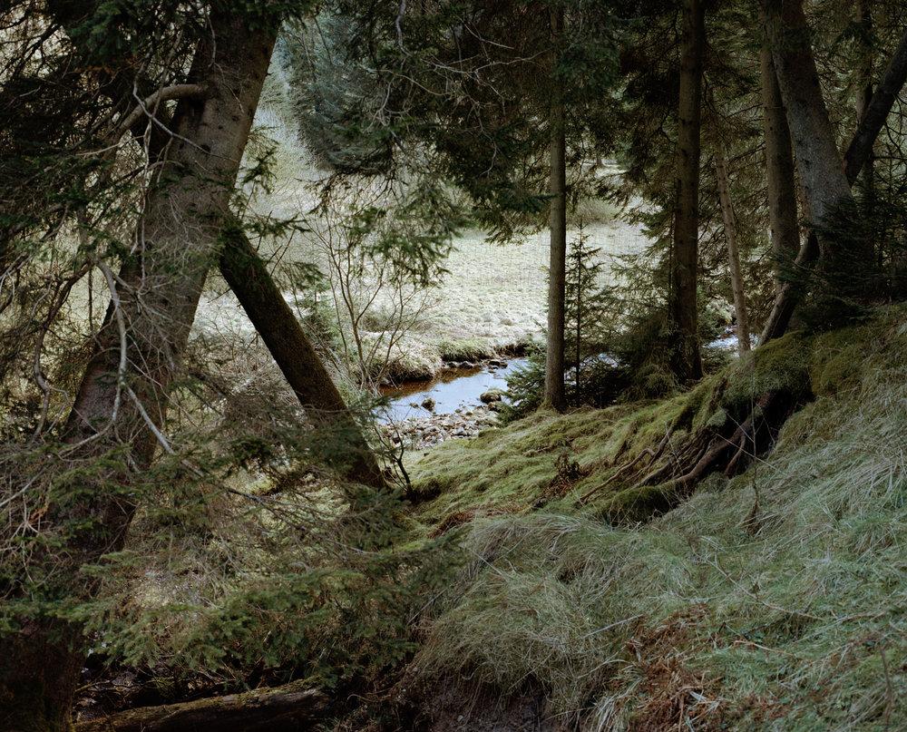 thistleandrose-21.jpg