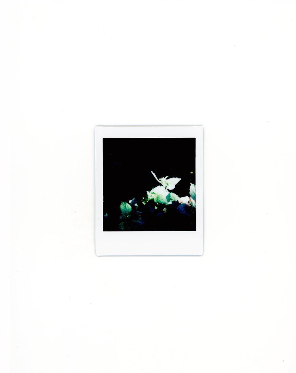 polaroids-3.jpg