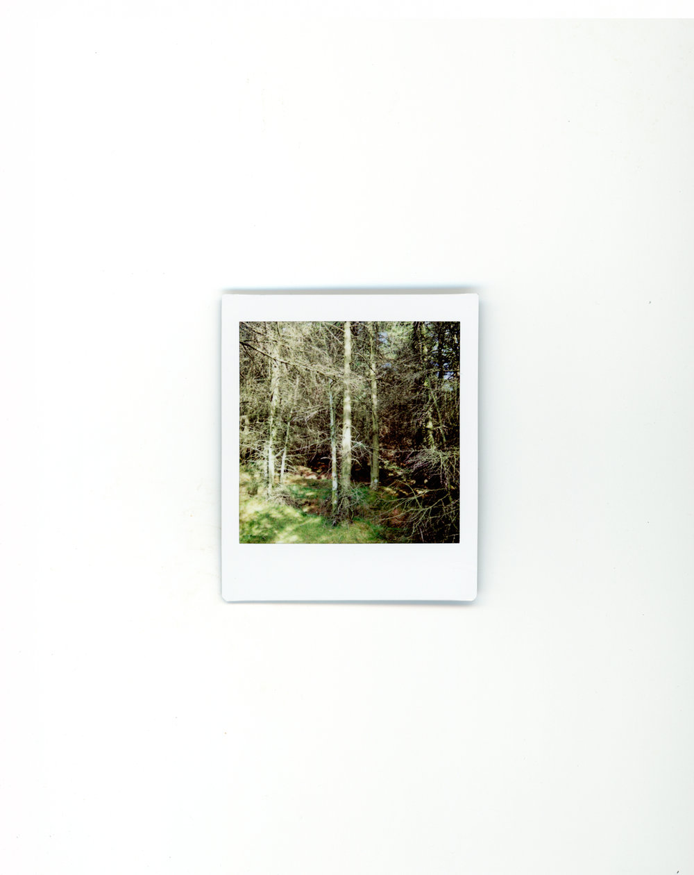 polaroids-10.jpg