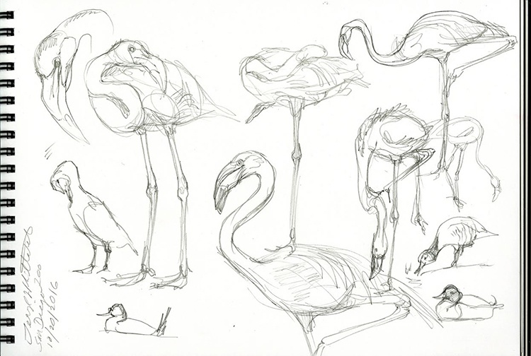 flamingo_sketch_from_san_diego_zoo.jpeg