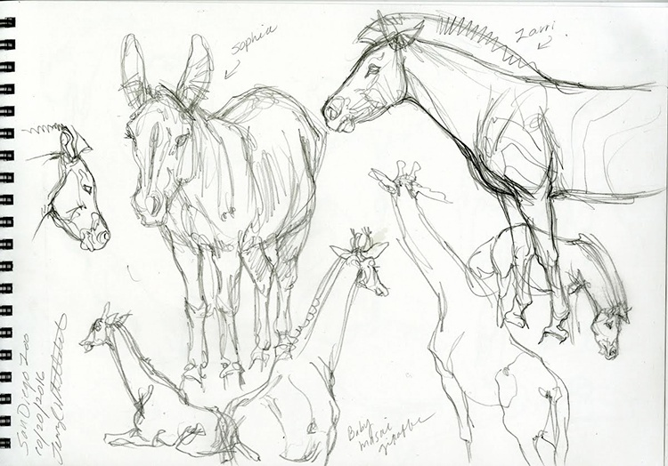 giraffe_and_zebra_sketch_from_san_diego_zoo.jpeg