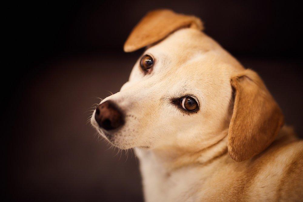 All Shook Up Pet Care - Oak Harbor, WA