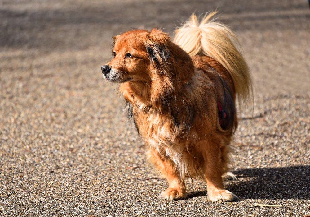 Pampered Pooch Dog Day Care - Oak Harbor, WA