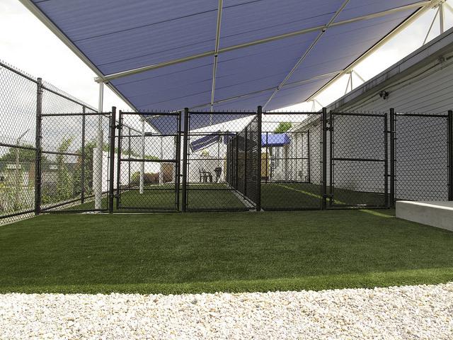 dog day care facility