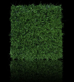 sportsgrass rush