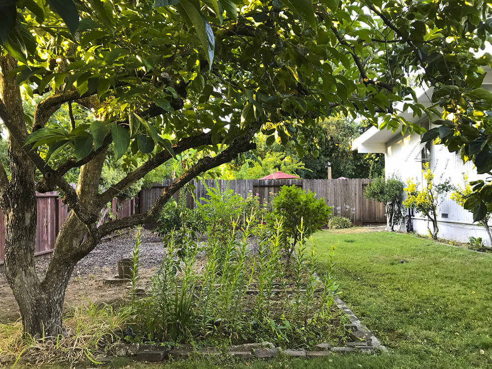 Annrud backyard.jpg