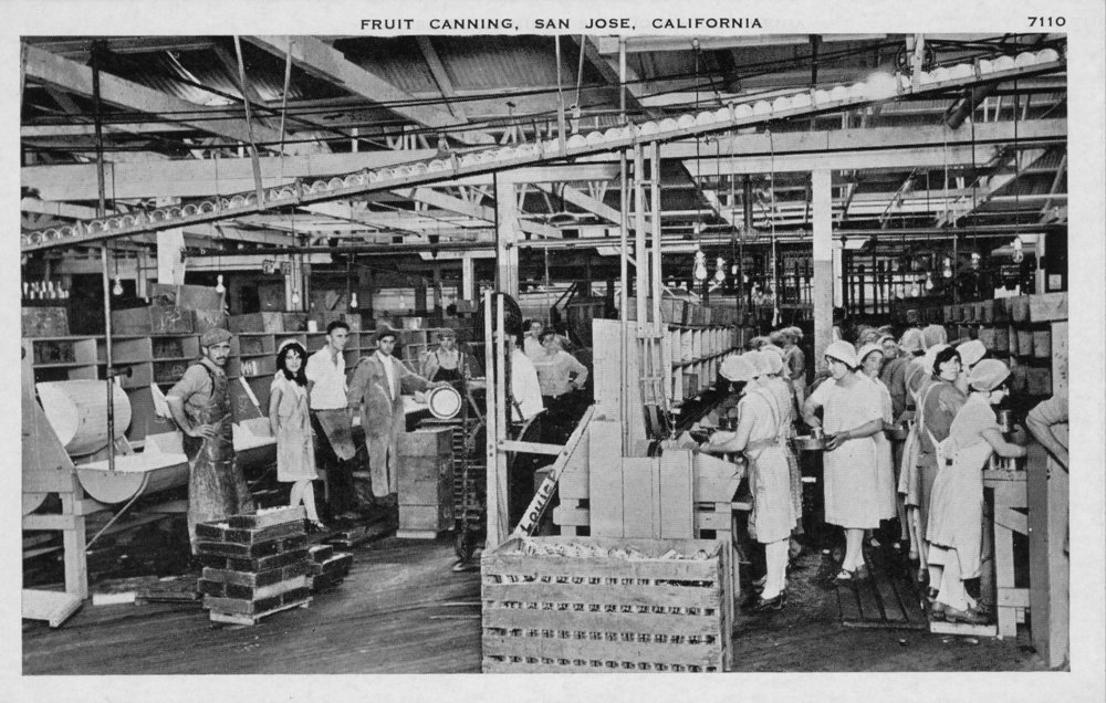 The interior of an unidentified cannery in San Jose.
