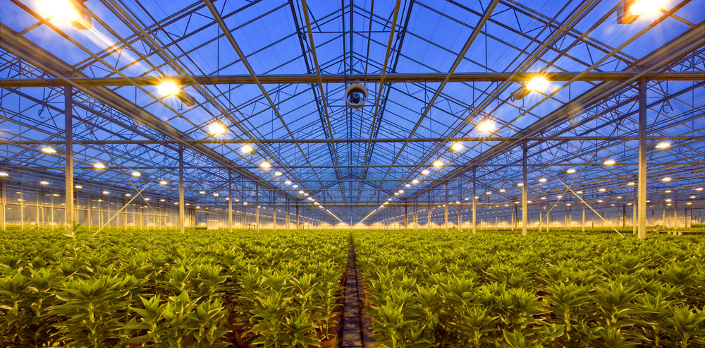 A greenhouse with lots of HPS lights