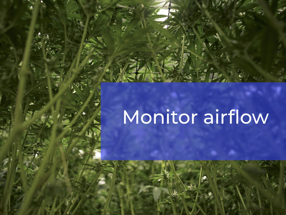 airflow temp.jpg