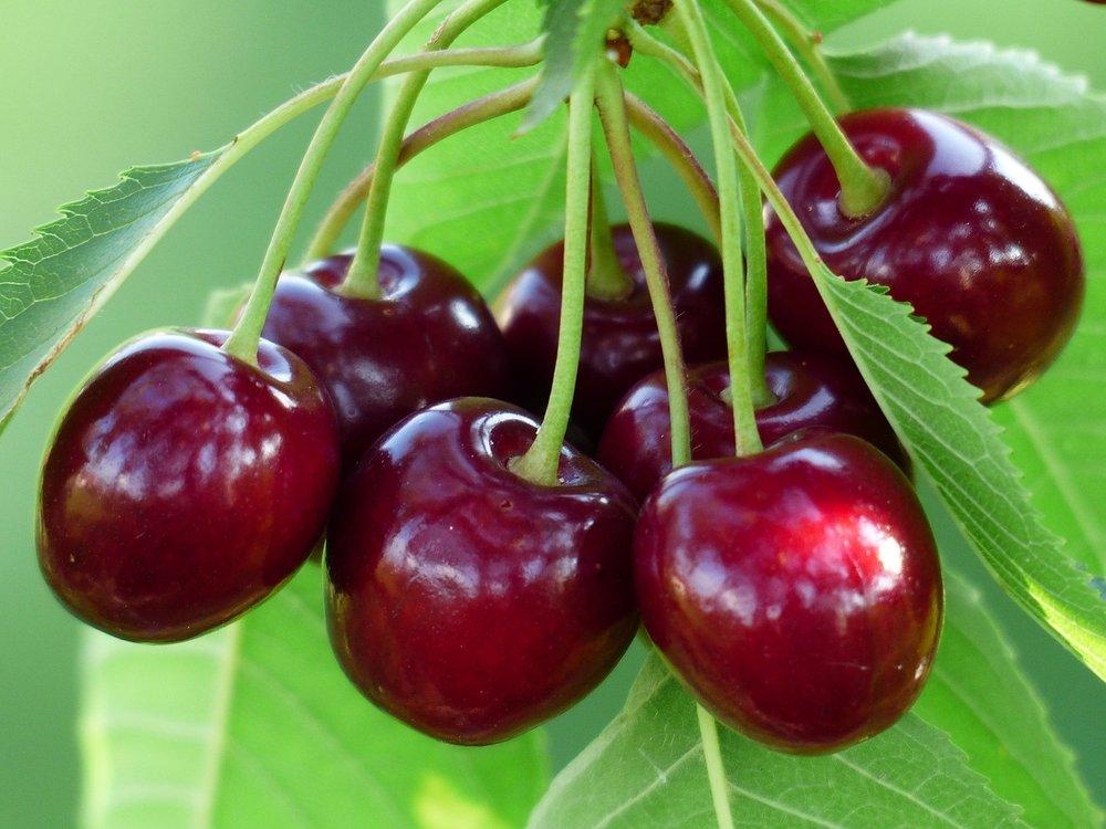 cherry-167341_1280.jpg