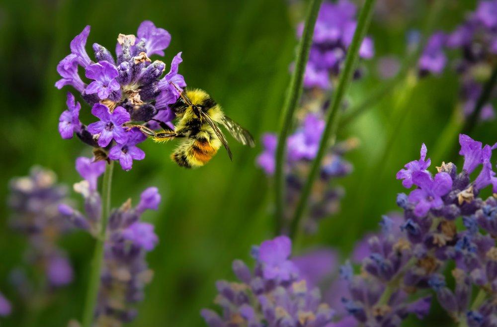 We support honeybees!