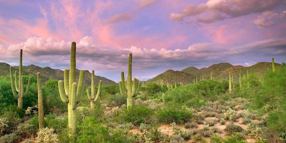 cactus-web.jpg