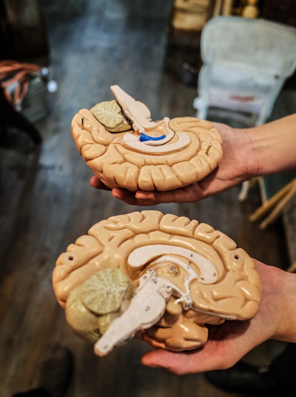 brain-sculpture.jpg