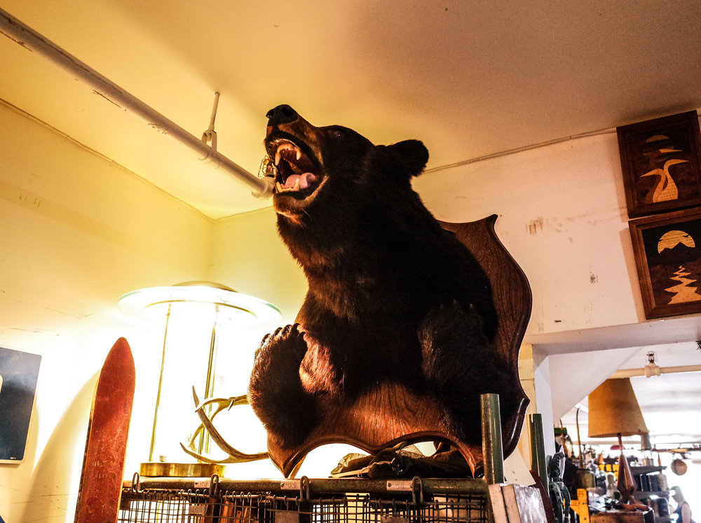 bear-taxidermy.jpg