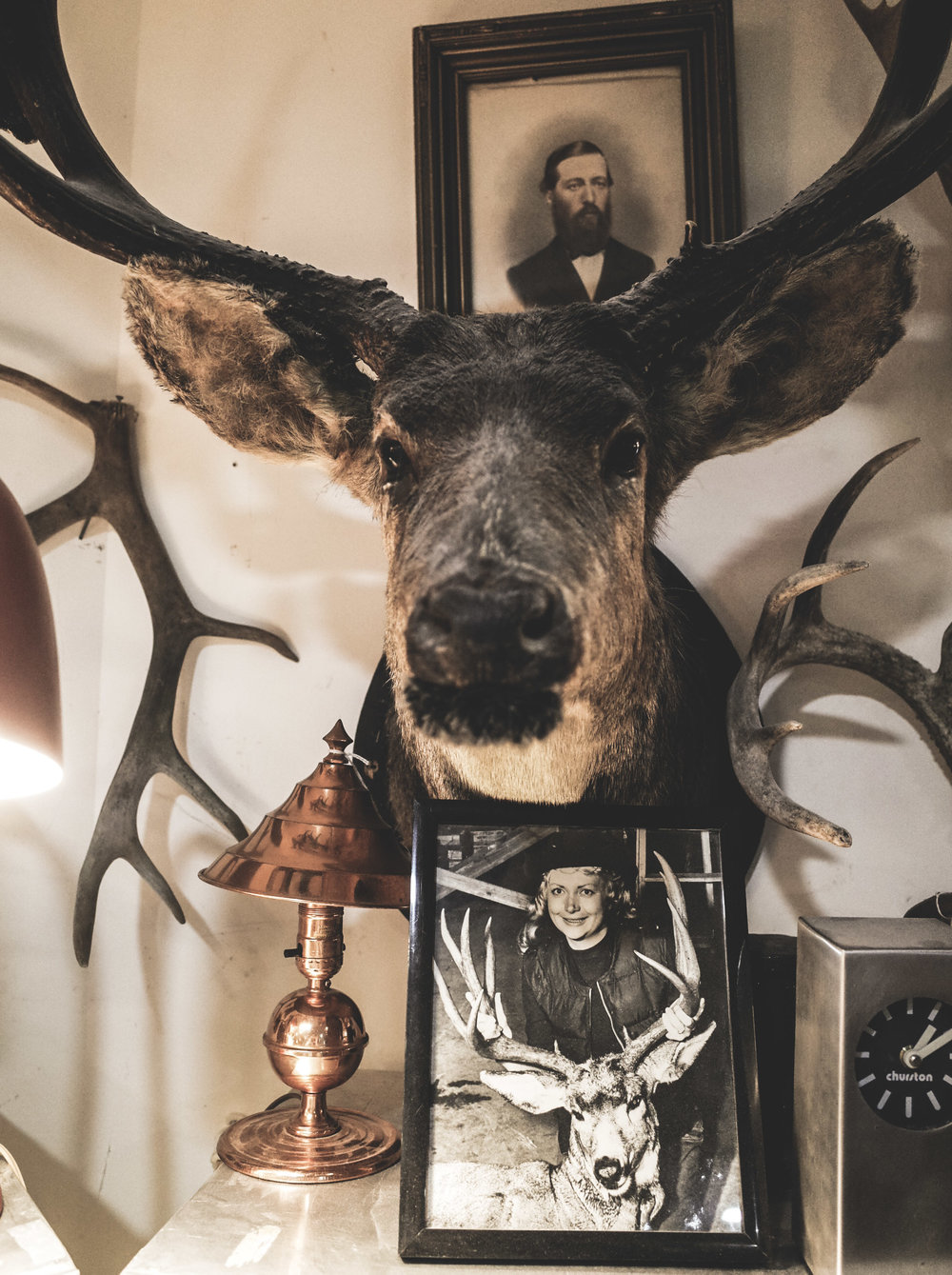 buck-taxidermy-2.jpg