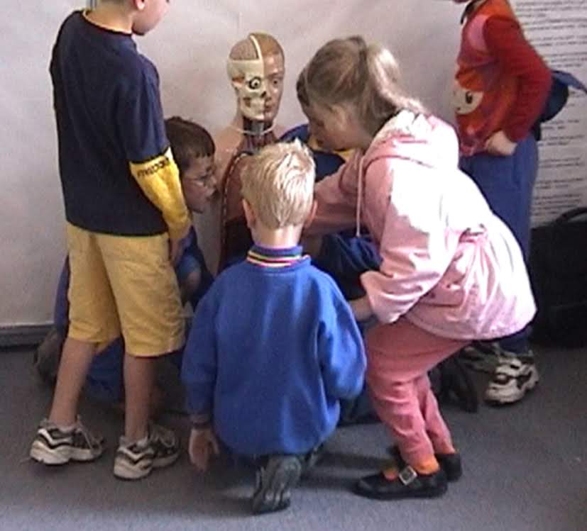 Children and anatomical model