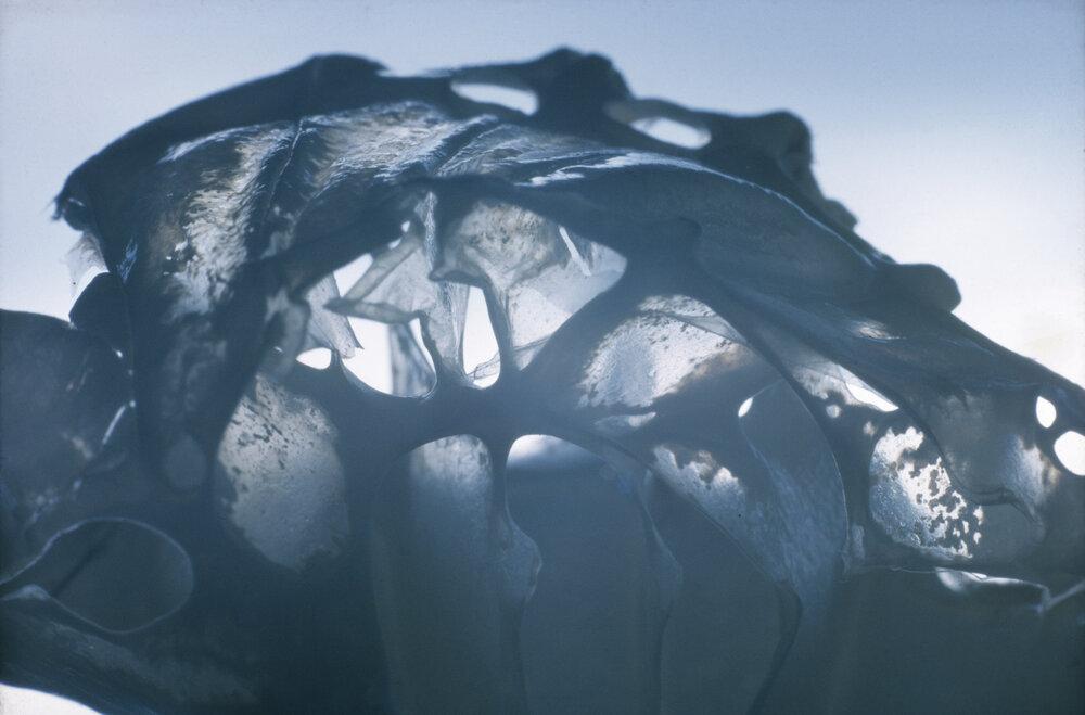 Translucent crab shell