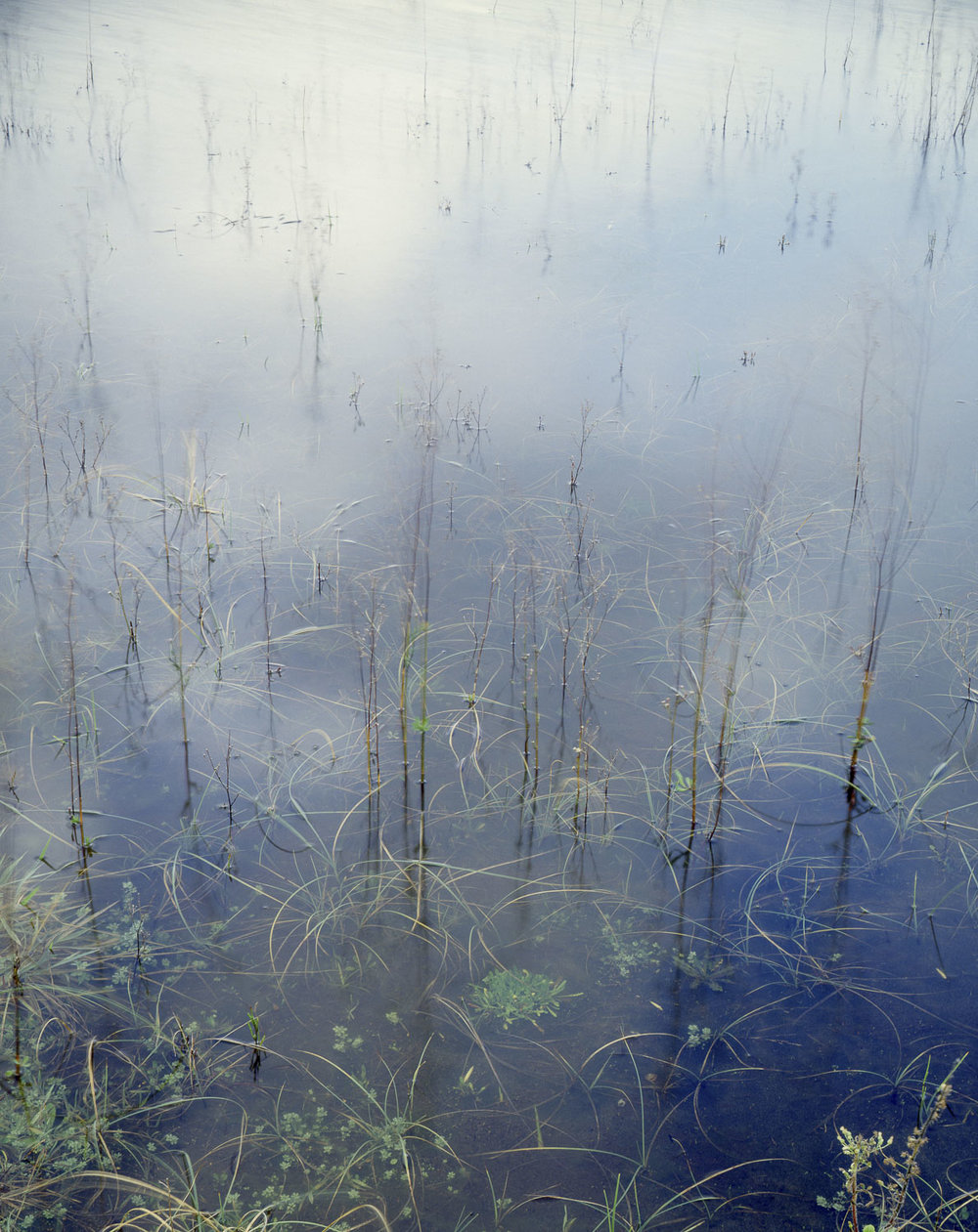 Grasses, Whatipu lagoon (1984)
