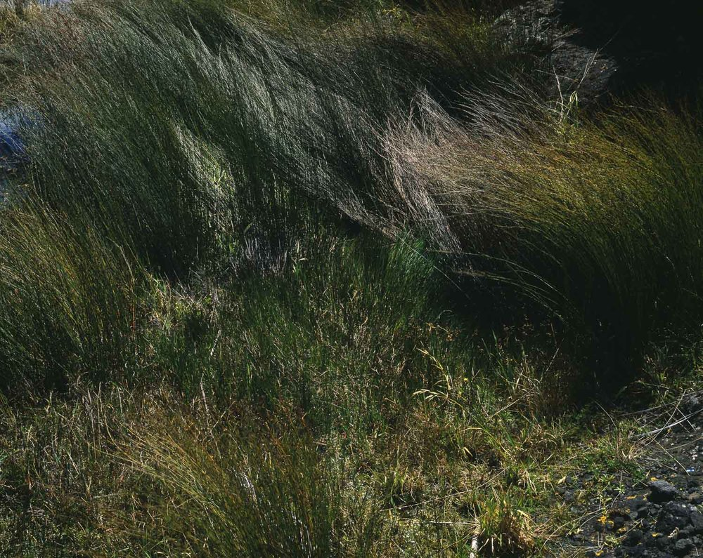 Sedge, Windy Point. Whatipu (1985)