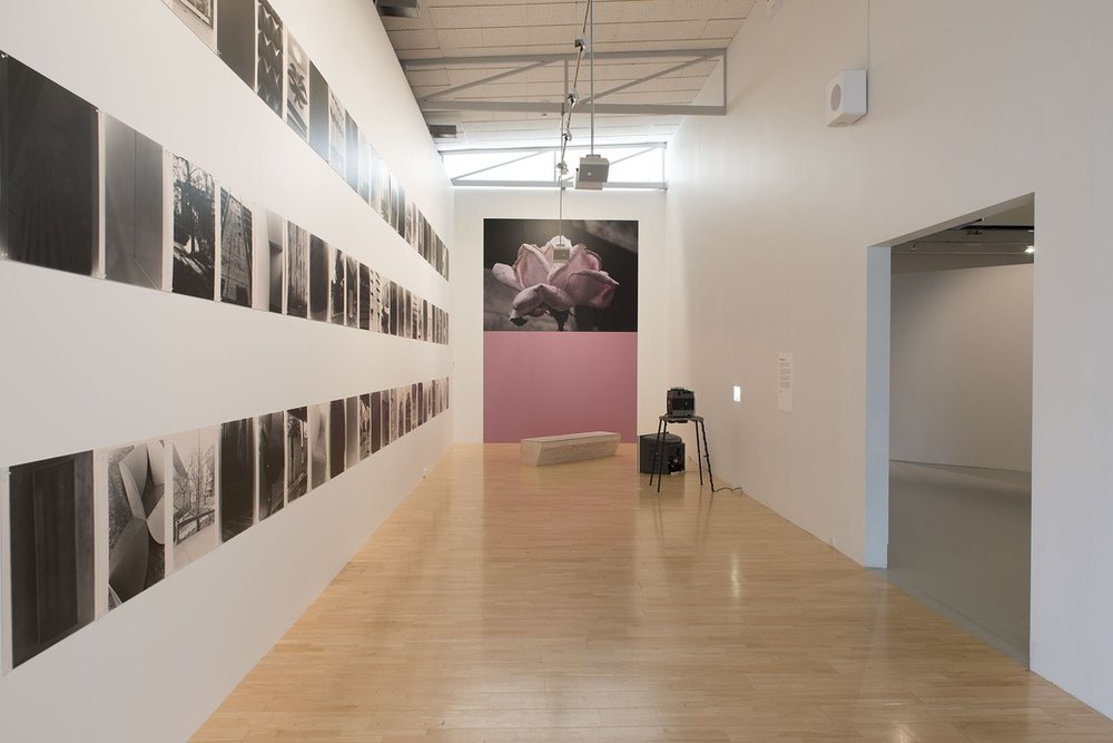 INSTALLATION VIEW,  GAVIN HIPKINS: THE DOMAIN . PHOTOGRAPHER JOHN LAKE.