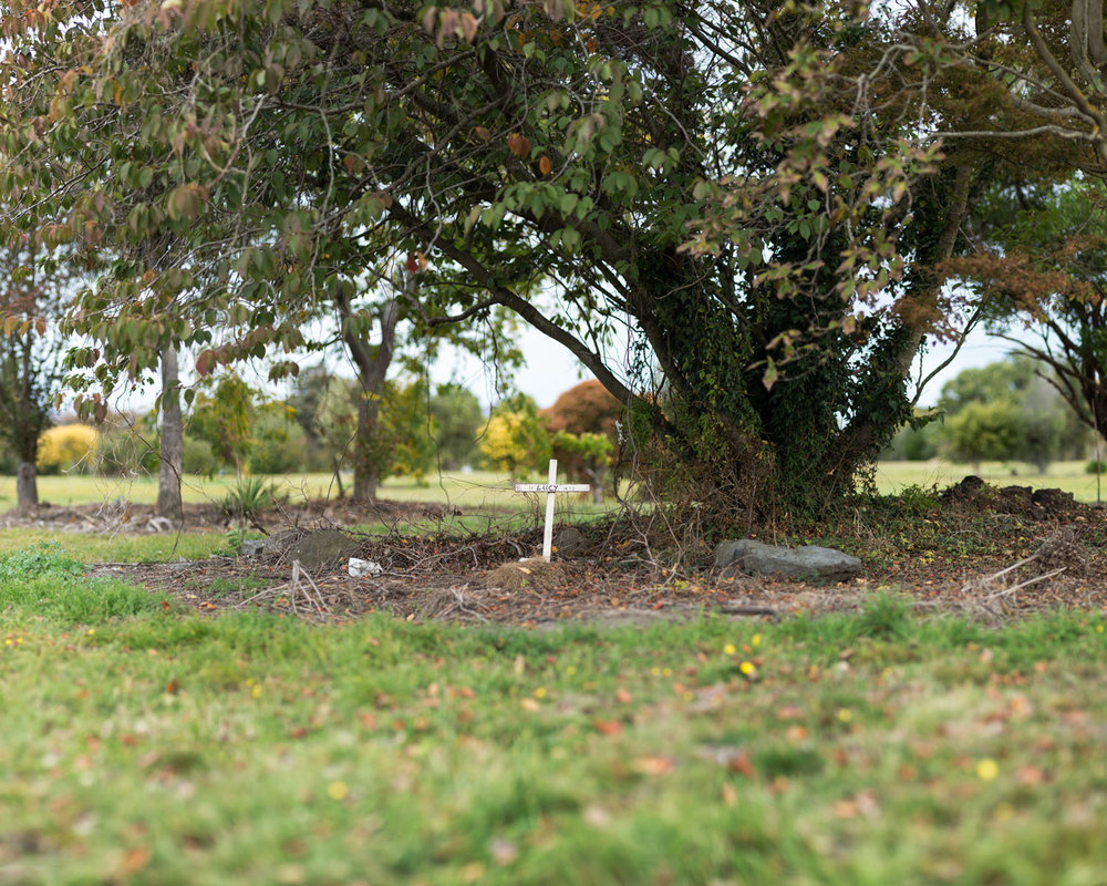 JOHN COLLIE  Pet Grave , 2016