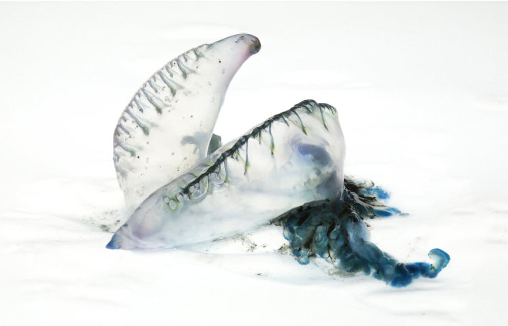 Denise Batchelor, Blue Series 5, 2017, 740x506 mm