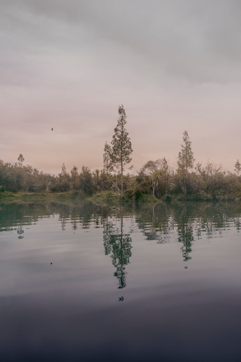 Kate van der Drift ,  Young Kahikatea, Northern Large Pond , 2018, archival pigment print on matte photo rag, edition of 5, 1220mm x 814mm