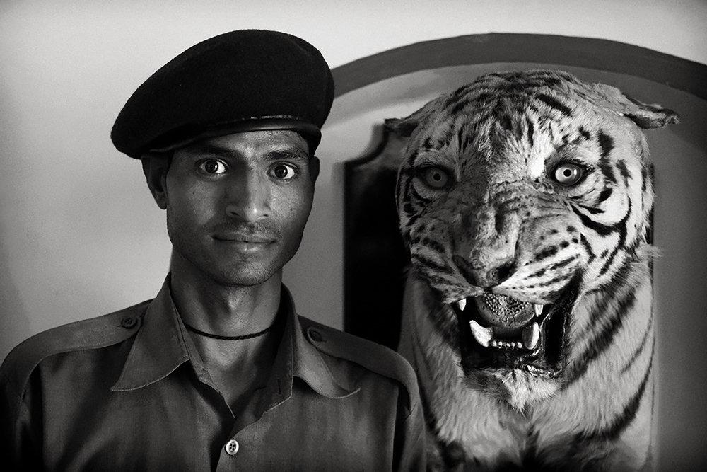 Julian Ward  Guard and Tiger, Bundi, Rajasthan, India  2010