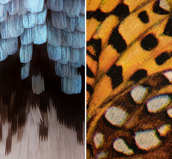 Left to right: Lycaeides melissa (Melissa Blue) wing scales, 1, 2016. With thanks Musée Cantonal de Zoologie, Switzerland. Speyeria coronis halcyone Edwards, from Nabokov's copy of W.J. Holland, The Butterfly Book, 1, 2016. With thanks New York Public Library.